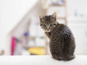 【症例】猫背が気になる、治したい(30代男性)
